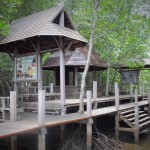 Kung Krabaen Bay Nature Centre (6)
